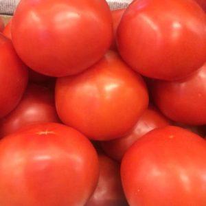 томат помидор обычный