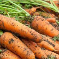 морковь отчественная