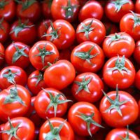 томат бакинский